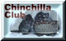 The Chinchilla Club